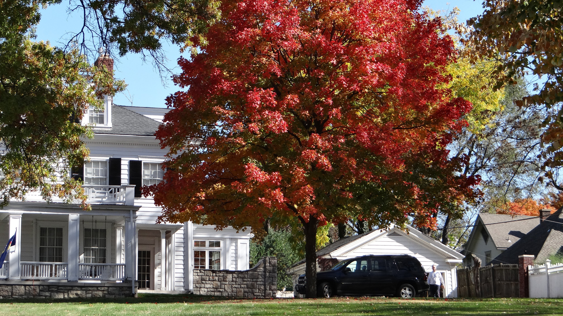 Best Trees to Grow Curb Appeal