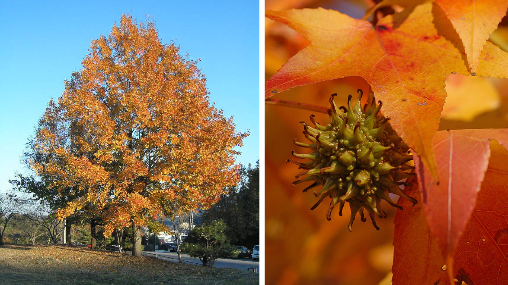 11 Trees You Should Never Plant in Your Yard