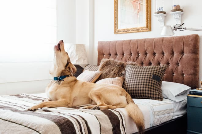 I Shopped Around for a House That Was Perfect for My Dogs. Yes, Really